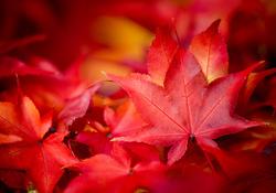 Autumn Albums